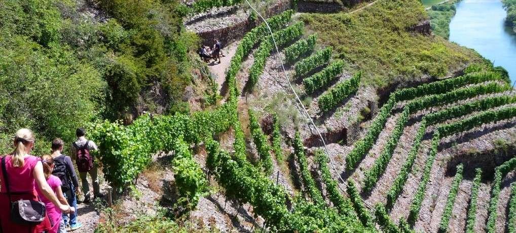 Calmont Klettersteig: Todesangst über der Mosel