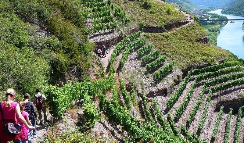 Fantastische Aussicht über den Calmont Klettersteig und die Mosel.