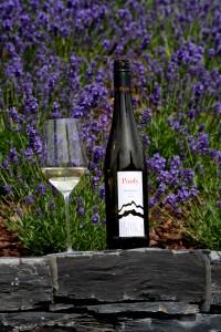 Wein von Axel Pauly.