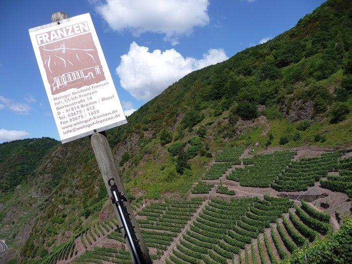Weingut Franzen, Mosel, Reben im Bremmer Calmont