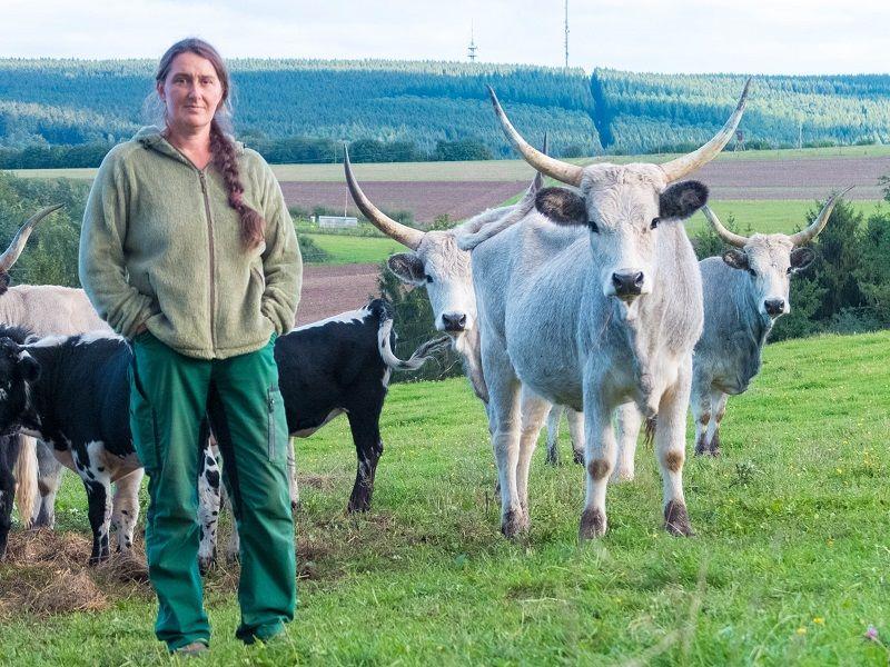 Michaela Scholl inmitten ihrer Rinder. Auf dem Veldenzer Bergfrieden lebt der Moselochse.