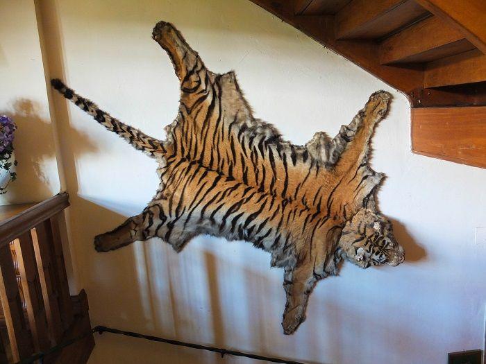 Tigerfell, Lübke, Nachlass