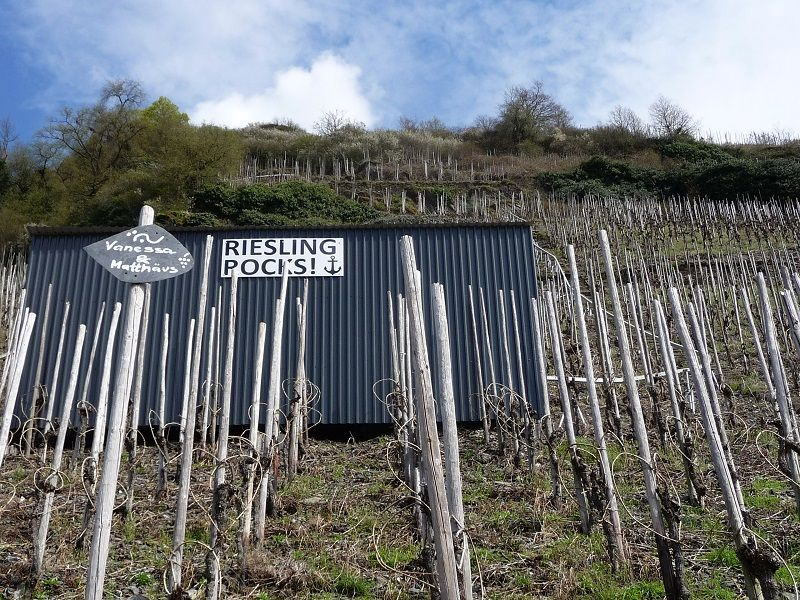 Mosel, Riesling rock´s, Weingut Immich-Anker