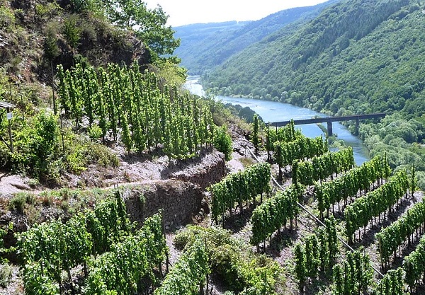 Mosel, Weinbaugiet, Calmont