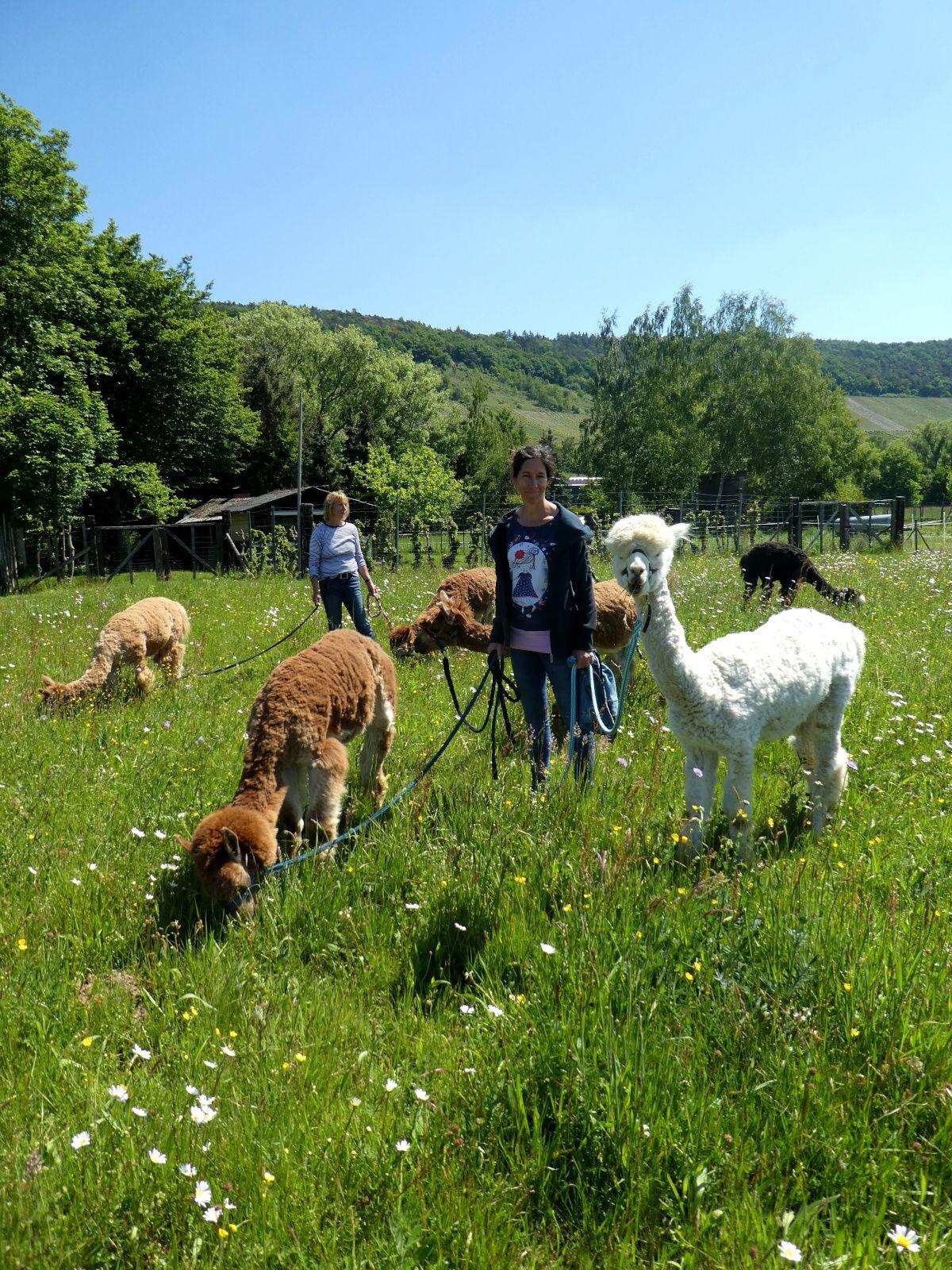 Alpaka, Farm, Mosel
