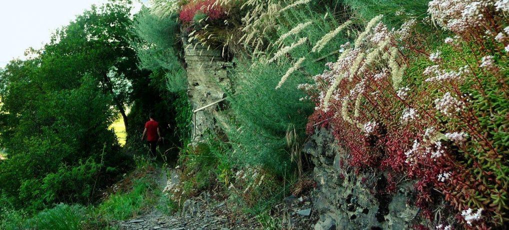 Erdener Kletterweg: Kraxeln, wo der Pfeffer wächst