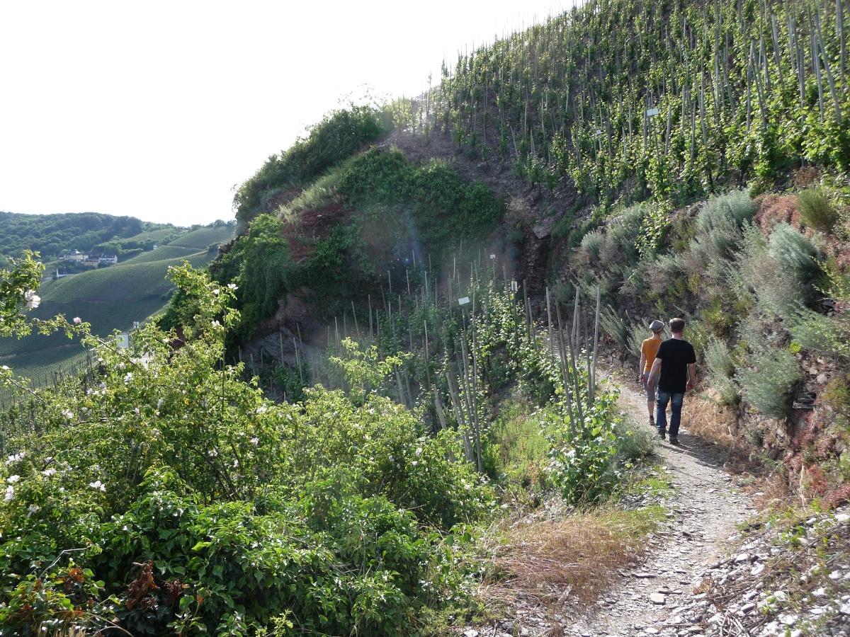 Felsenwelt, Wanderweg, Ürzig