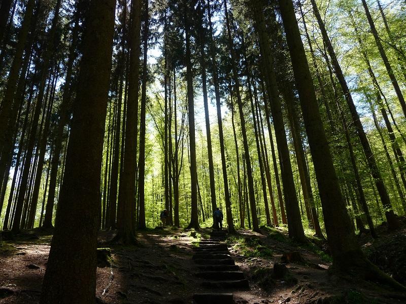 Wald bei den Irreler Wasserfällen.