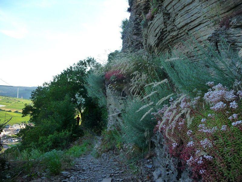 Erdener Kletterweg, Erdener Treppchen, Mosel