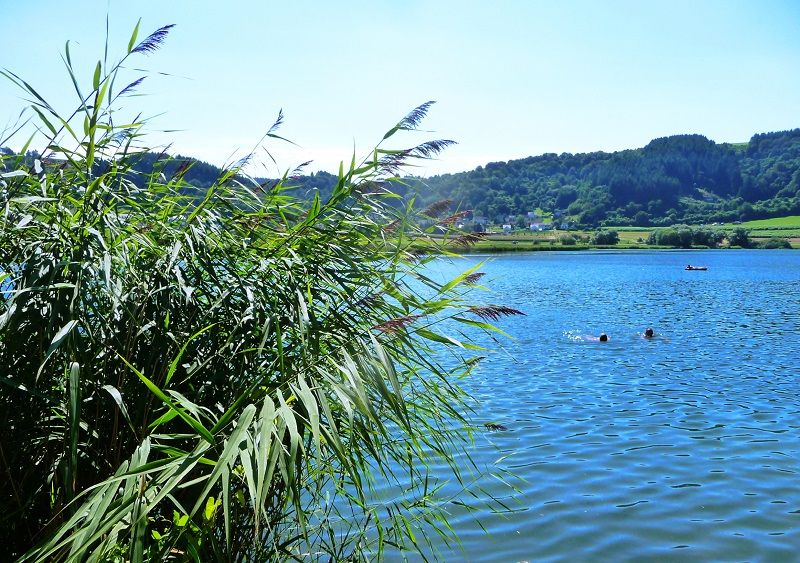 Maare, Eifel, schwimmen, Meerfelder Maar