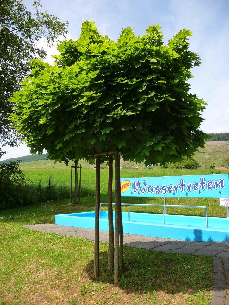 Mosel, Wassertretanlage in Siebenborn