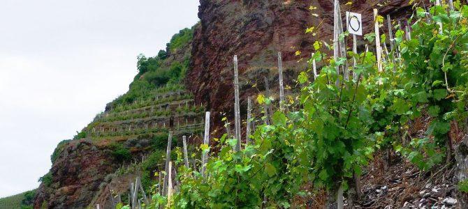 Weingut Schmitges in Erden: Herr der Lage