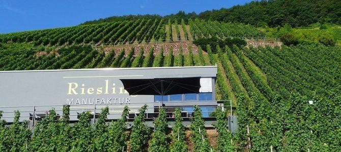 Weingut Rebenhof in Ürzig: Design zum Wein
