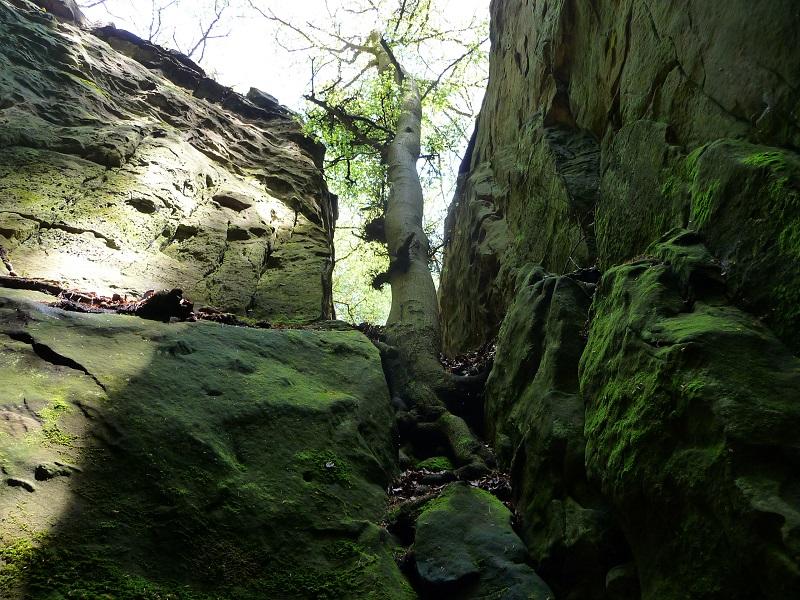 Ein Baum wächst auf dem blanken Fels in der Teufelsschlucht