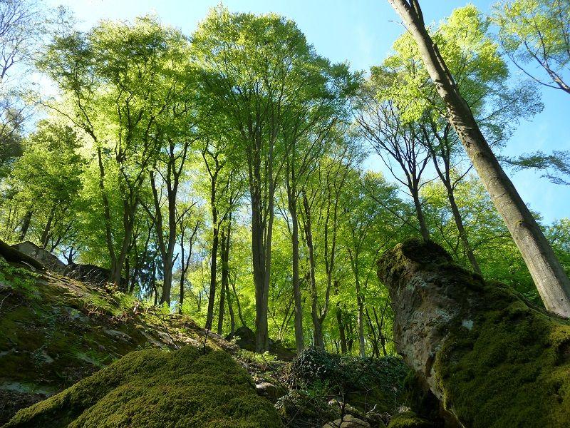 Wald in der Teufelsschlucht.