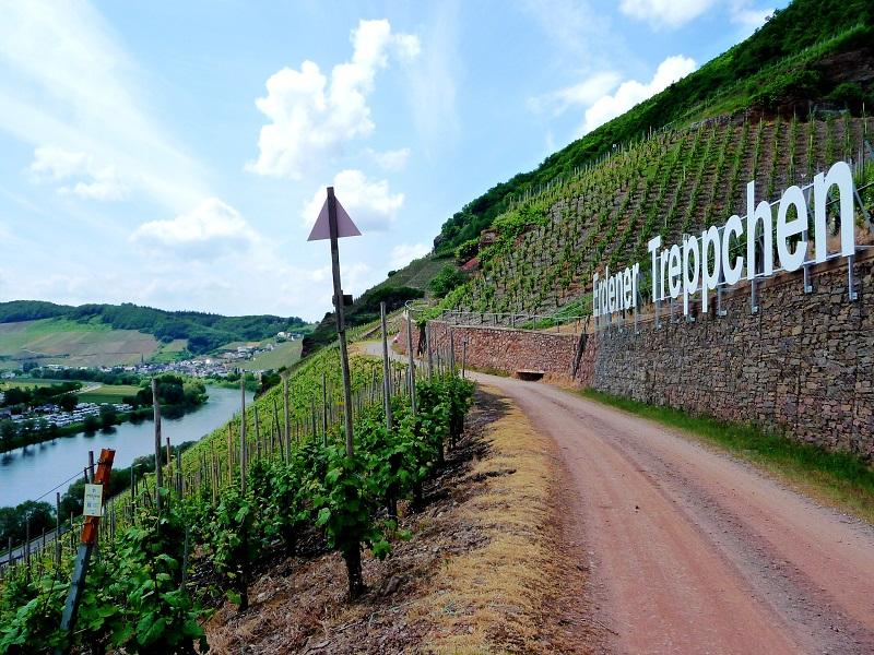 Mosel, Weinbaugebiet, Erdener Treppchen
