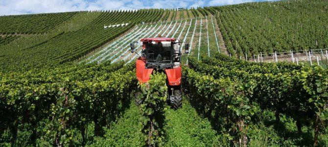 Weinbaugebiet Mosel: 25 Fakten für Besserwisser