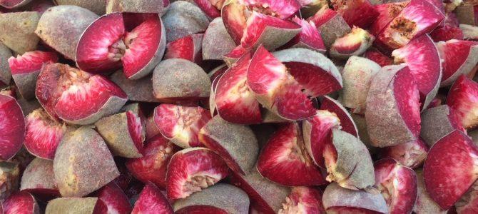 Was den roten Weinbergpfirsich so einzigartig macht – mit Rezept