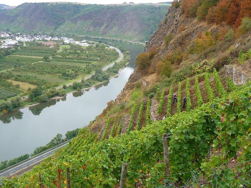 Mosel, Weinbaugebiet, Winninger Uhlen