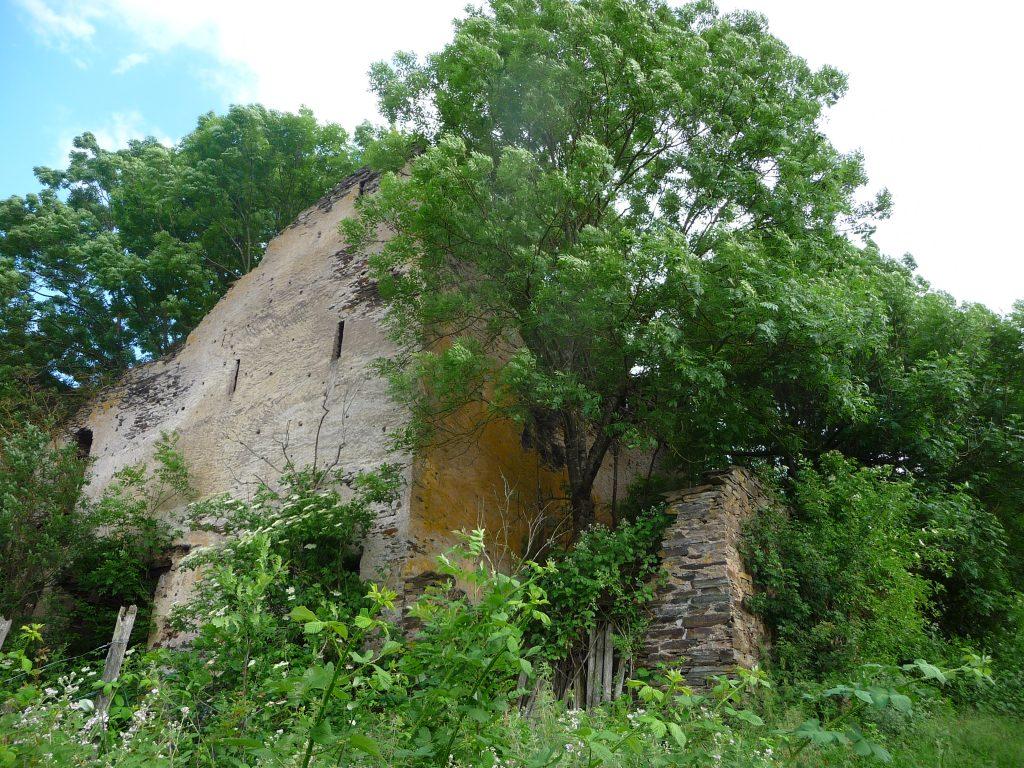 Ruine im Weinberg