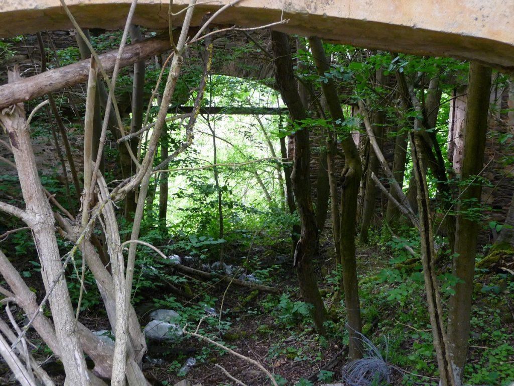 Im Marienthaler Hof in Zell wachsen Bäume